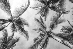fundo-palmeiras